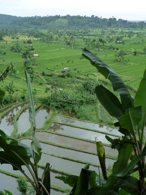 Üppige Natur auf Bali