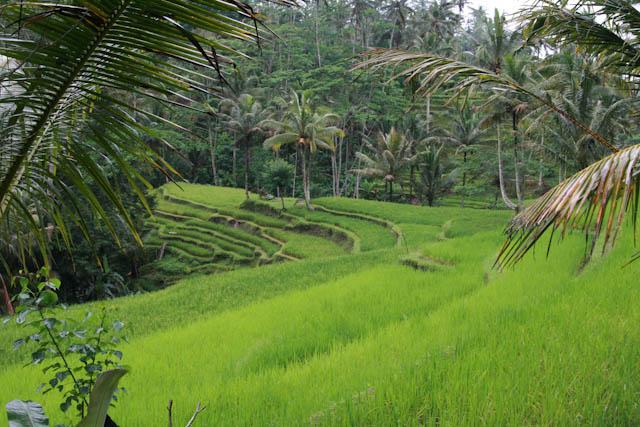 Bali ein Ort wo die Seele zur Ruhe kommt