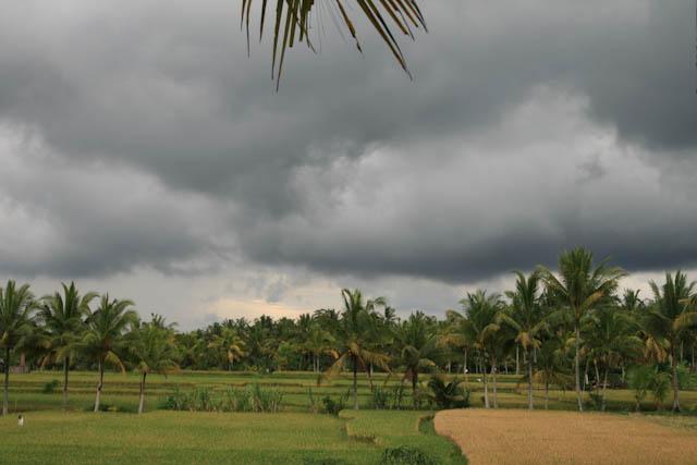 Landschaft bei Ubud