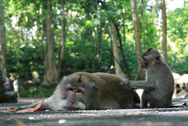 Zoo auf Bali