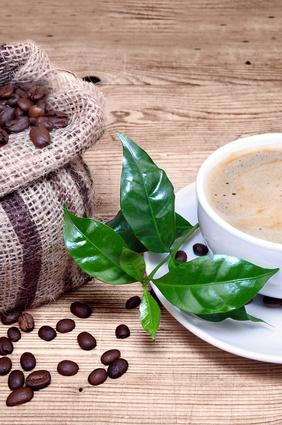 Durch den Fleckenmusang entsteht der teuerste Kaffee der Welt