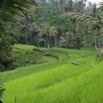 Bali Ubud 02