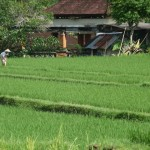 Bali Ubud 03